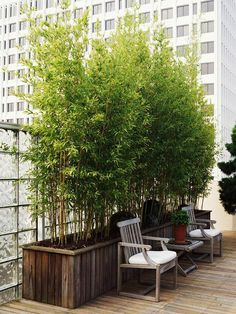 Bamboo used as a screen for privacy