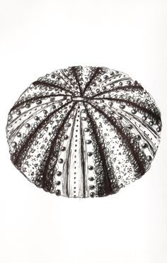 Sea Urchin, Pen Drawings and Prints, made to order, fully customized.. £20.00, via Etsy.