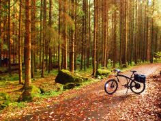 Ride in the woods on a Prodecotech electric bike, it;s a beautiful day!