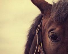 Horse Photography - Dog Photographer, Ayrshire, Edinburgh dog photography, Glasgow, cat photographer