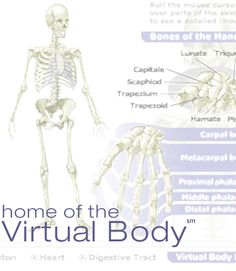 Home of the Virtual Body
