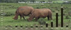 Two men were sentenced on Tuesday to fifteen years in jail after being found guilty of poaching in Limpopo province in South Africa. The two were caught on a farm near the Kruger National Park in October 2011.