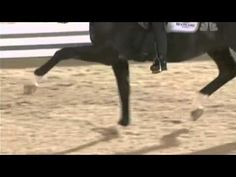 Totilas...this stallion knows how to make an impression! Gangam Style. XD But seriously, I'm in love with this horse!!