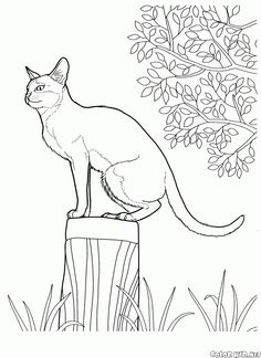 The free coloring pages 'World of animals' will introduce children to the 'Cats' topic. Download and print out the coloring pages right away.