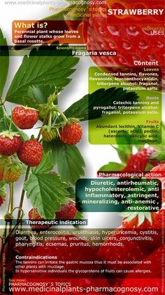 Strawberry benefits. Infographic. Summary of the general characteristics of the Strawberry plant. Medicinal properties, benefits and uses more common of Strawberry. Fruits. http://www.medicinalplants-pharmacognosy.com/herbs-medicinal-plants/strawberry/benefits-infographic/