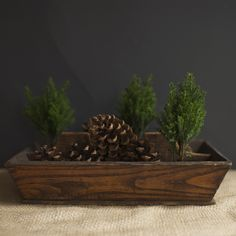 Cypress decoration with pine cones