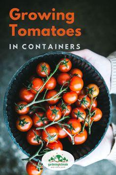 No garden? No problem.you can still have homegrown tomatoes! Tomatoes can easily be grown in pots on a patio, conservatory or balcony. Learn how here! Growing Tomatoes Indoors, Tips For Growing Tomatoes, Growing Tomatoes In Containers, Growing Herbs, Home Grown Vegetables, Fall Vegetables, Growing Vegetables, Vegetable Garden Tips, Veggie Gardens
