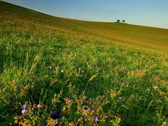 flowers of Liptov, Slovakia by Martin Sojka, via Flickr Two Trees, What A Beautiful Day, Stunning Summer, Green Landscape, Photo Sessions, River, Places, Herbs, Outdoor