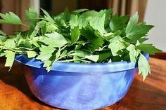 Pesto z libečku Korn, Pesto, Chutney, Parsley, Salsa, Planter Pots, Food And Drink, Herbs, Homemade
