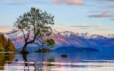 The lone tree of Lake Wanaka, New Zeeland