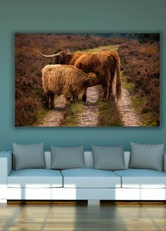 Highland cows by Tim Abeln Photography and Digital Art Prints. Beautiful wall decoration for your home and office. A calf drinking with its mother on a road through the moor. A special and loving moment. #photography #animals #landscape #artprints #artforsale #walldecor #interiordesign #canvasprints