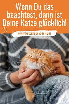 Wer sich eine Katze anschaffen möchte, sollte sich schon vorher Gedanken darüber machen, was alles für eine artgerechte Katzenhaltung benötigt wird und welche Verantwortung es mit sich bringt. #katze #katzen #katzeanschaffen #katzekaufen #wohnungskatze #katzentipps #katzenverhalten #katzewohnung
