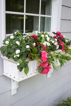 Begonias and double impatiens with potato vine in window boxes