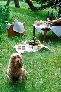 Pâtés, Terrines, Foie Gras, Cou de Canard Farci, Piquenique,Vin de Gaillac. Et notre petite Fifty!