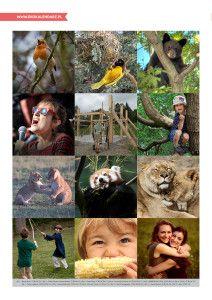 Światowy Dzień Zwierząt – Czym zwierzęta różnią się od ludzi? - opis zajęć w pakiecie: http://www.ekokalendarz.pl/swiatowy-dzien-zwierzat-pakiet-edukacyjny/