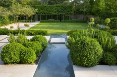 Pleached head, reflecting hedge and pavers echo shape of lawn (Charlotte Rowe).