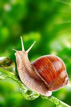 I think I can snail