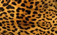 pele de animal - Pesquisa Google