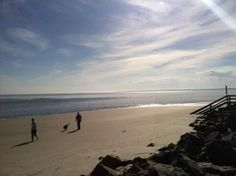 Enjoy St. Simons Island With Your Pet