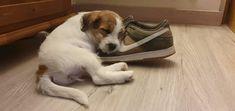 Siete beneficios de convivir con una mascota pero hay más Pets