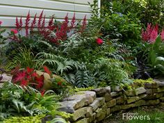 Beautiful Perennial Garden - astilbe, caladium, sword fern, creeping jenny, stacked stone bed