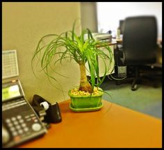 great office decor perfect for a cubical or small desk bonsai plants bonsai tree office table
