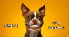 Smile It's Friday friday happy friday tgif friday quotes friday quote funny friday quotes quotes about friday