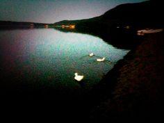 Papere al lago di Vico al crepuscolo 2