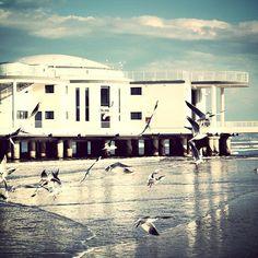 #italy #sea #senigallia #rotonda #seagulls #gabbiani