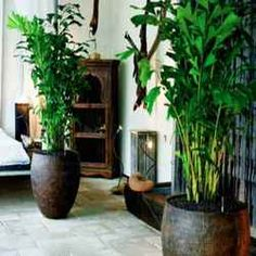 Exotic Tropical Chinese Evergeen Houseplants Interior Pinterest