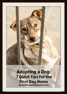 Dog Training Tips 7 quick tips for first time dog owners Choosing A Dog, Aggressive Dog, Dog Training Tips, Potty Training, Dog Care, Puppy Care, Dog Mom, Dog Owners, Rescue Dogs