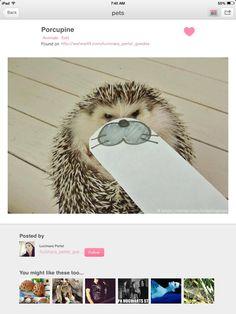 #Hedgehog_lover