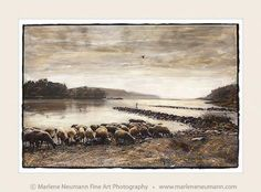 TRANSKEI RIVER MOUTH...where sheep wander around freely..cows walk on the…