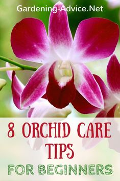 Gardening Tips Growing Orchids For Beginners - 8 Tips and Care Instructions including orchid types that are suitable for beginners. - Growing Orchids For Beginners - 8 Tips and Care Instructions including orchid types that are suitable for beginners. Orchid Plant Care, Phalaenopsis Orchid Care, Orchid Plants, Orchid Flowers, Garden Care, Diy Garden, Terrace Garden, Indoor Orchids, Orchids Garden