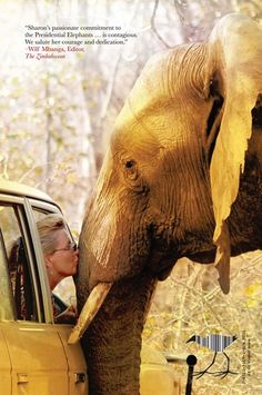 Drive-by elephant kiss. Sharon Pincott - dedicated to her Conservation work with The Presidential Elephants of Zimbabwe via Africa Geographic Photo Elephant, Elephant Love, Elephant Bath, Elephants Never Forget, Save The Elephants, Beautiful Creatures, Animals Beautiful, Animals Amazing, Mon Zoo