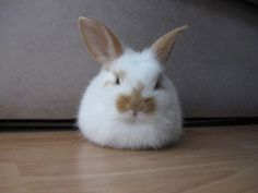 Is it a cotton ball with a face or a bunny?