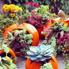 ~ pumpkins and succulents