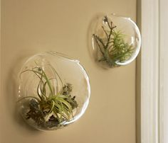 Wall vase with air plants