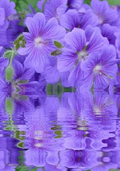 Animated Flowers, Flowers, Beautiful Flowers, Keefers Photo