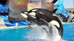 SeaWorld to open first park without killer whales