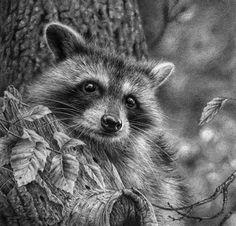 denis mayer jr wildlife artist - Google Search