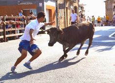 Santacara: Vacas de Santos Zapateria Cow, Animals, Saints, Cows, News, Animales, Animaux, Cattle, Animal
