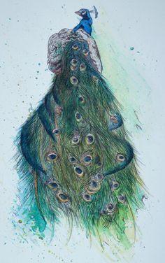 peacocks illustration vintage - Google Search