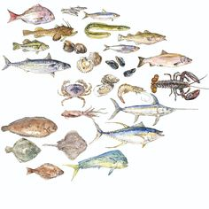 25 varieties of seafood, their sustainability, tasting notes, and substitutions.