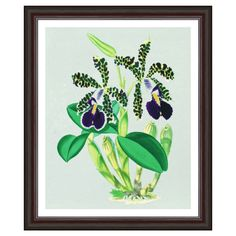 Vintage Orchids Framed Art Print By Evie Empire