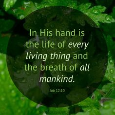 Job 12:10 ~ In His hand...