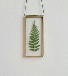 Pressed fern leaf wall hanging / window hanging / pressed flower gift / dried flower decor / botanical art