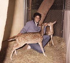 Michael Jackson feeding deer.
