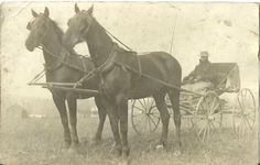 ANTIQUE REAL PHOTO POSTCARD RPPC GENTLEMAN IN HORSE DRAWN CARRIAGE 1910