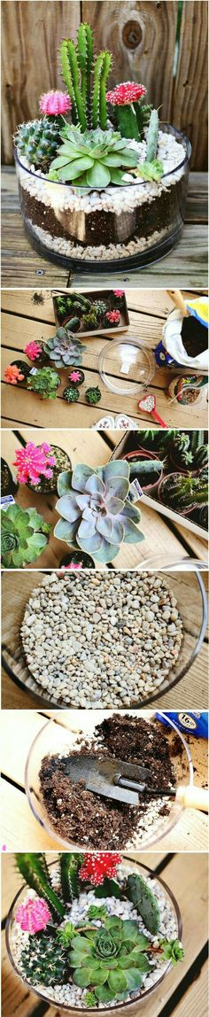 This super cute and easy to make terrarium looks ultra stylish with cactus and succulentsterrarium! This super cute and easy to make terrarium looks ultra stylish with cactus and succulents Terrariums Diy, Succulent Terrarium, Cacti And Succulents, Planting Succulents, Garden Plants, Indoor Plants, House Plants, Planting Flowers, Indoor Cactus